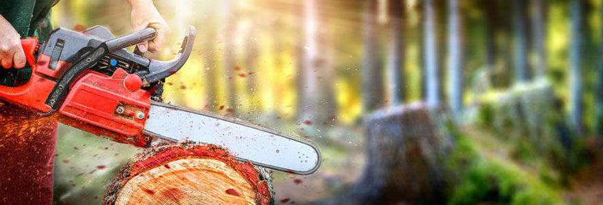 Tronçonneuse coupe de bois